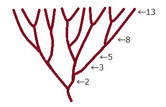 枝分かれの数がフィボナッチ数列になっている例